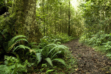 Knysna Forest, South Africa