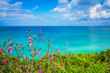 Cornish hillside meadow on the coast