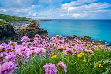 Pink sea thrift flowers on the sea coast Fototapete