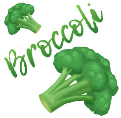 Broccoli vegetable icon. Cartoon vector illustration isolated on white background. Series of food and drink and ingredients for cooking