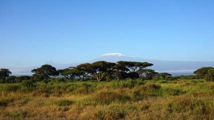 Foto op Canvas Afrika kilimanjaro and kenyan landscape