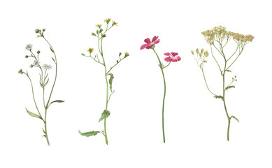 Set of watercolor summer flowers isolated on white background. Hand drawn illustration. Meadow plants.