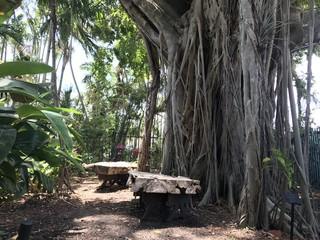 Banyan tree sitting area