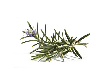Rosemary with flowers isolated on white background