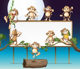 Playful Monkey and Whiteboard