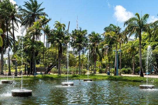Babassu Palms at 13 Maio Park Recife, Pernambuco, Brazil