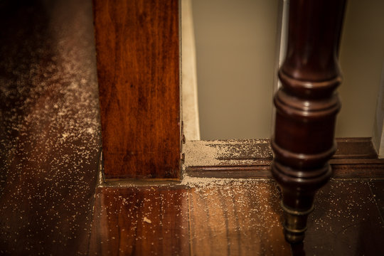 Indoor Termite Droppings