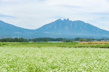 南阿蘇の蕎麦の花と根子岳