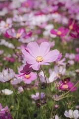 flower show 2017