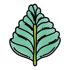 doodle natural leaf tropital botany style