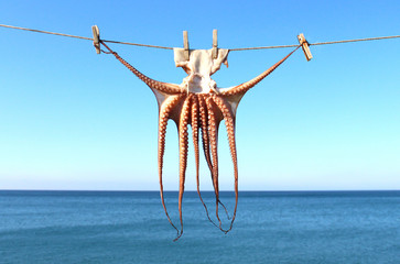 Drying squid, sea in background