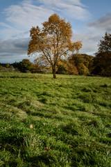 Wall Mural - England Landscape