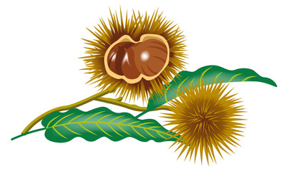Chestnut branch clip art