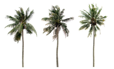 collection three Palm coconut the garden isolated on white background