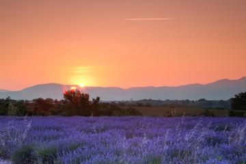 Fotobehang Crimson Lavender sunrise