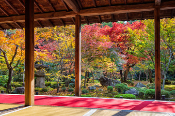 Fototapete - Colorful leaves in autumn park, Japan.