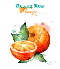 Orange fruit watercolor Vector. Juicy colorful template illustrations