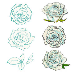 Rose buds set with summertime flowers in light color with hand drawn line contour isolated on white background - vector illustration of floral decorative elements in sketch style.