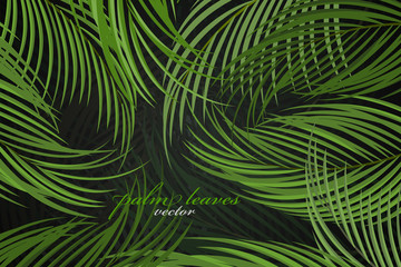 Palm leaves scene vector wallpaper nature background