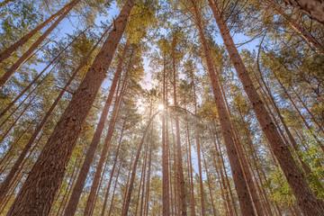 Wald im Sonnenlicht - Nationalpark Müritz