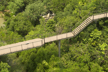 The wooden skywalk in outdoor green parks. Parks is natural abundance.