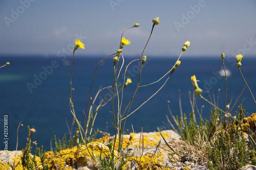 gelbe Blumen am Strand\