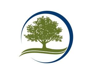 oak wealth solution