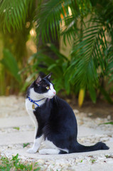 Cute tuxedo cat Marlyanka is smiling with surprised face