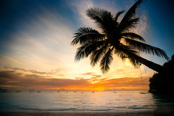 Coconut palm tree over blurry sunset ocean
