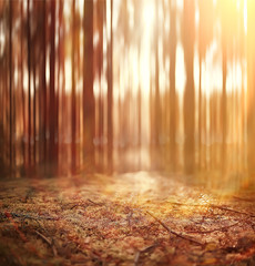 autumn forest background / blurred image of autumn landscape in the forest, pine forest, vertical lines, sun, bokeh in a forest background, sunset on a forest walk