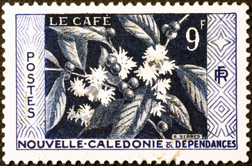 Plant of coffee on postage stamp of New Caledonia