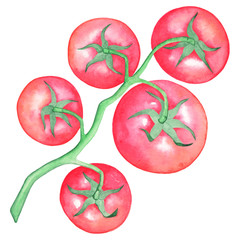 Hand draw red tomatoes on a branch, separately, a white background. Watercolor illustration