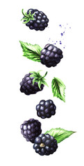 Falling ripe berries blackberry, vertical composition. Watercolor hand drawn illustration,  isolated on white background