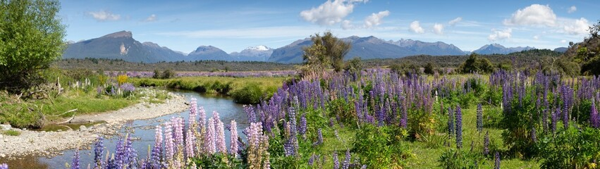 Panoramic view of a small river and mountain range approaching the fiordland area of New Zealand. Focus is on the mid range purple Foxglove plants.