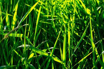 Fotobehang Bamboo Summer grasses
