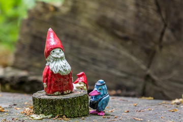 Gnomes with red caps and a blue bird in the middle of the forest