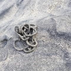 Strand - Küste - Wattwurm