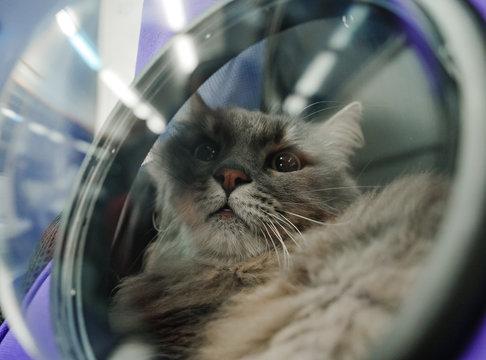 Cat transportation