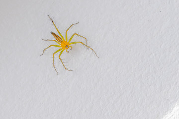 A colourful spider on a white wall.
