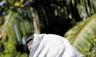 A chimpanzee covers itself with a blanket to protect itself from cold at Sao Paulo Zoo, in Sao Paulo