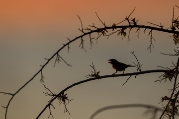 silhouette of bird on branch