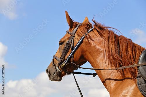 pas cher pour réduction nouveaux styles Couleurs variées séance de longe au manège avec cheval bai