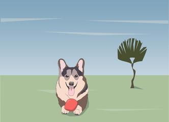dog lies, on nature