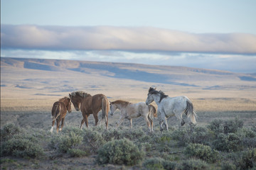 Wild horses standing on field Wall mural