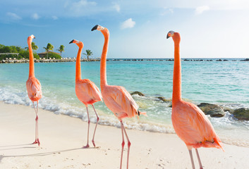 Foto op Textielframe Flamingo Flamingo walking on the beach