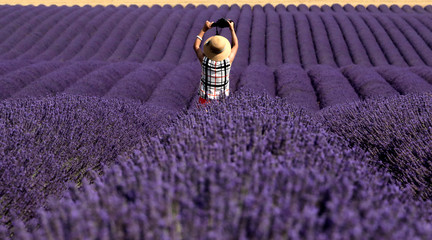 A Chinese tourist takes a picture in a lavender field in Valensole