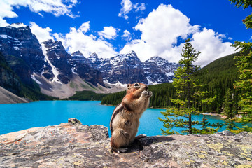 Ground squirrel feeding with Moraine Lake in background, Canadian Rockies, Alberta