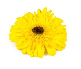 yellow gerbera isolated on white