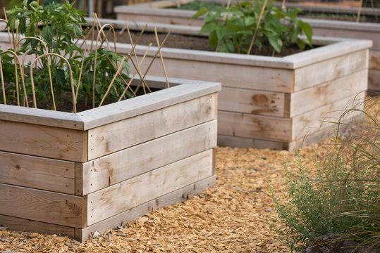 raised wood garden