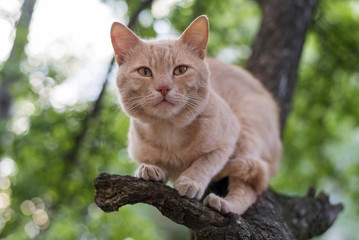 Red cat sitting on a tree in spring day